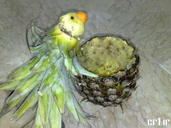 تزیین آناناس زیبا