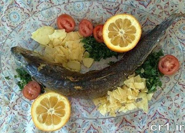ماهی شکم پر زیبا