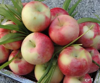 سیب گلاب مخصوص مربای سیب